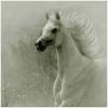 Caballeriza: ~Majestic Horse~