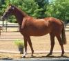 Caballeriza: caballo veloz