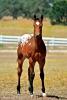 miguel-mendu - Horzer criador de caballos