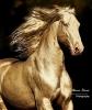 mendukoloco - Horzer criador de caballos