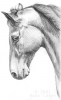ladylilian - Horzer criador de caballos