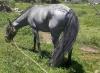 banda2 - Horzer criador de caballos