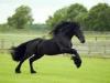 jhalok - Horzer criador de caballos