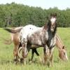 Basta de tratar mal a los caballos/Ponis