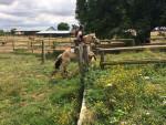Lutin - Caballo de Noruega Macho (7 años)