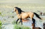 Mustang - Mustang