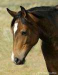 Josie - Mustang (2 años)