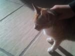 chataigne - Camargo (9 meses)
