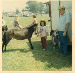 Dolly - Shetland (7 años)