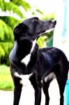 balia - Hembra (4 años)