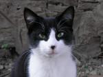 Gato Tommy - Macho (5 meses)
