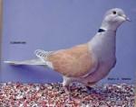 Pájaro - (2 años)