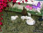 Pollo - (1 mes)