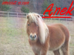 Poney Anek -  Hembra (6 años)