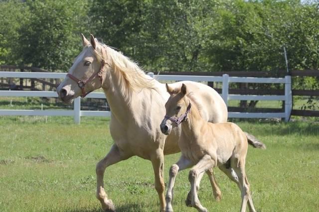 Blondie - Macho (9 meses)