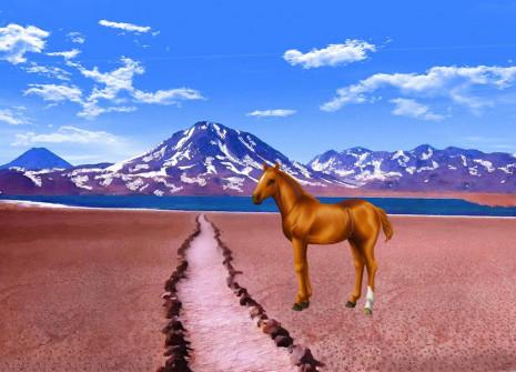 Un recién llegado a la Caja  sorpresa: ¡adopta el caballo chileno!